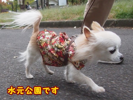 blog8465a.jpg