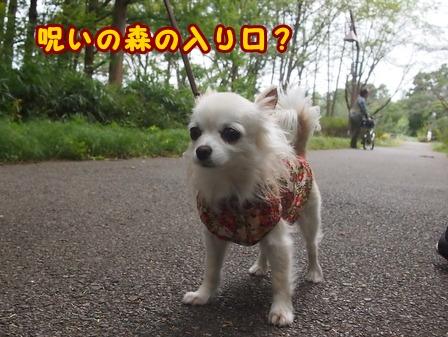 blog8471a.jpg
