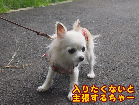 blog8472a.jpg