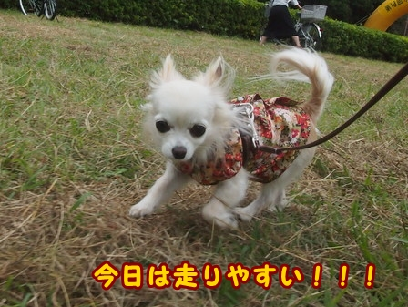 blog8477a.jpg