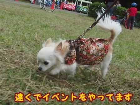 blog8478a.jpg