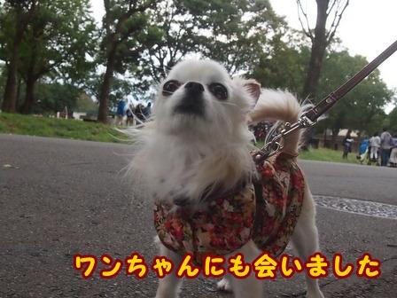 blog8483a.jpg