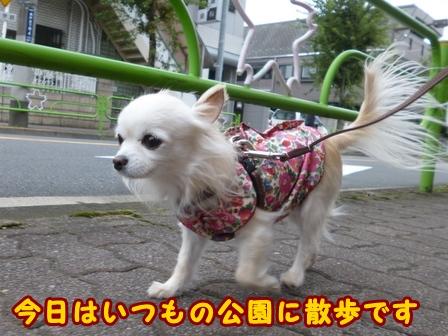 blog8487a.jpg