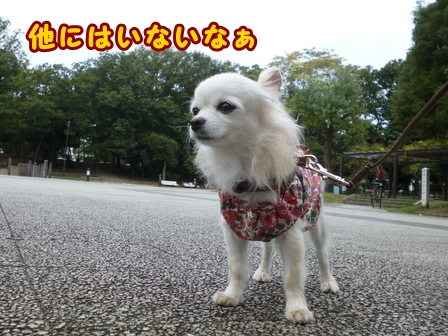 blog8491a.jpg