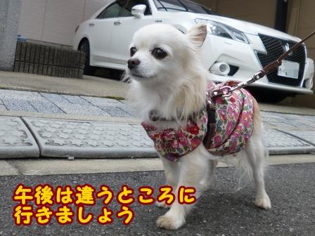 blog8492a.jpg