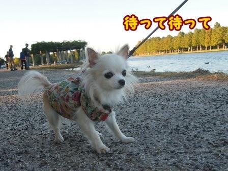 blog8512a.jpg