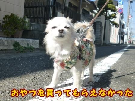 blog8546a.jpg