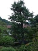 旧岩崎別邸(箱根) (4)