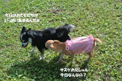 DSC_2941_convert_20161019110226.jpg