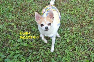 DSC_2944_convert_20161019110400.jpg