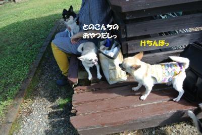 DSC_2994_convert_20161020093205.jpg