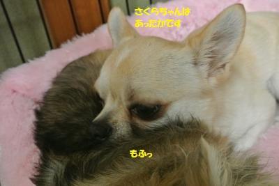 DSC_3142_convert_20161026101309.jpg