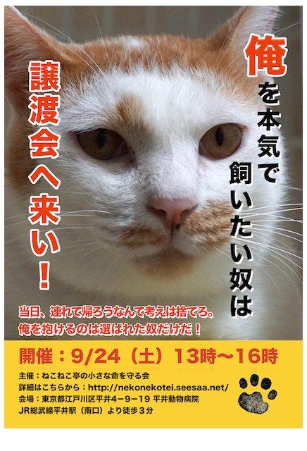猫の譲渡会ポスター