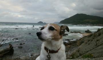 小梅と日本海