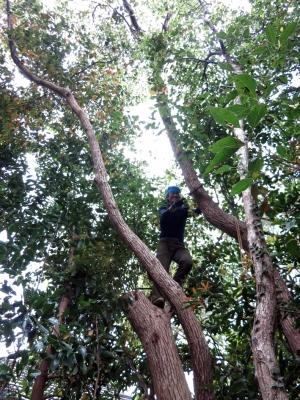 160405-41=野本広伸,立木伐採 a和室外