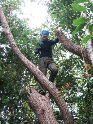 160405-42=野本広伸,立木伐採 a和室外