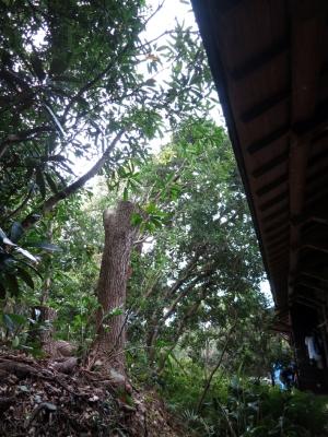 160405-61=立木伐採完了 a枕流庵和室外