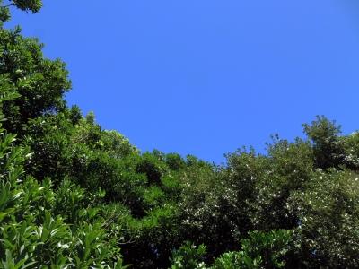160704-2=樹々の緑と青空 a前庭
