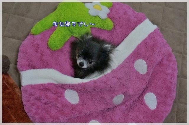 ぴょこっと4 16-04