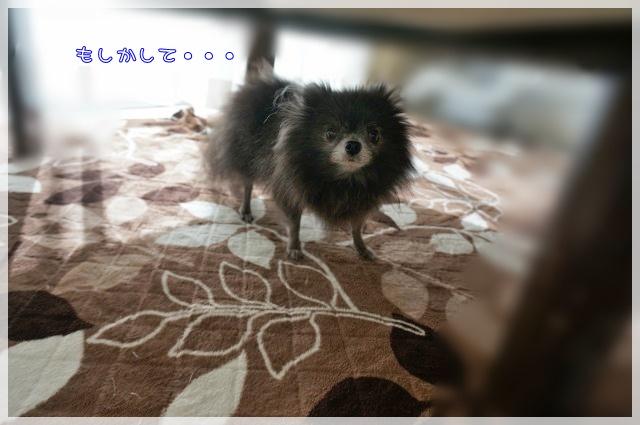 1月のしゃんぷー・ちろる1 16-04
