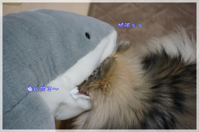 さめちゃん5 16-06