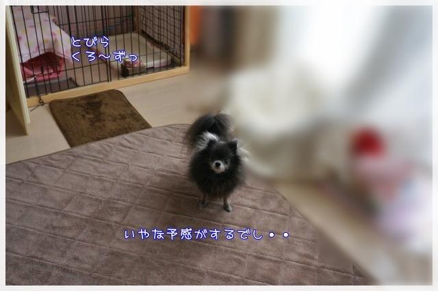 3月のしゃんぷー・ちろる1 16-06