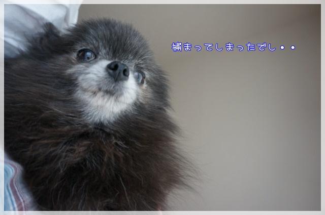 4月のしゃんぷー・ちろる1 16-08