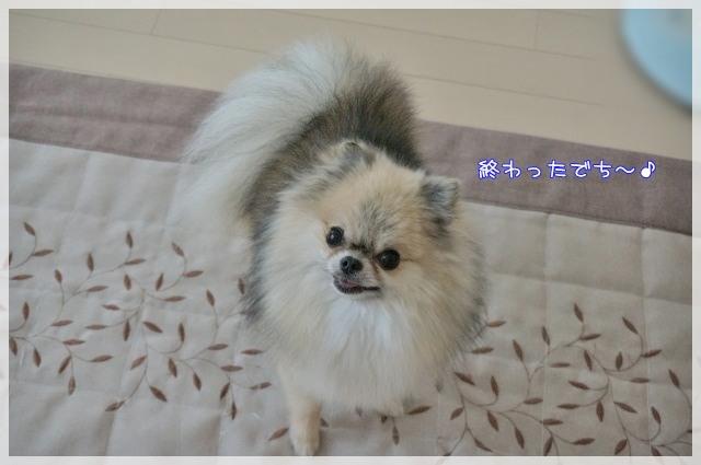 6月のしゃんぷー・まろん7 16-09