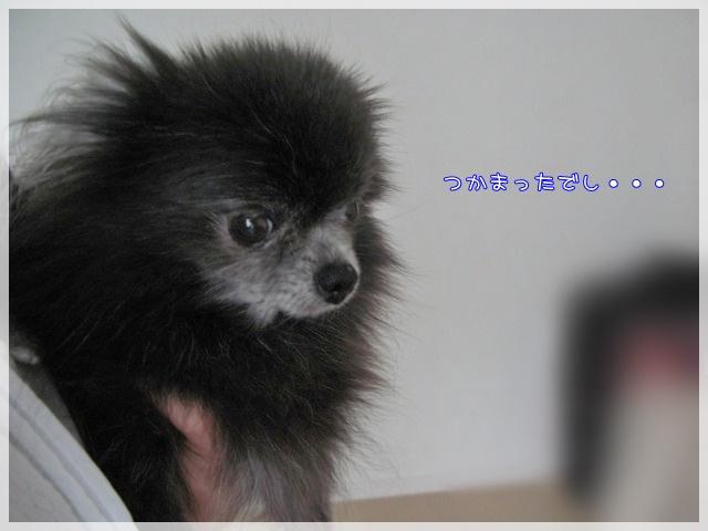 7月のしゃんぷー・ちろる1 16-10