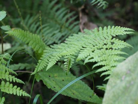 キスジツマキリヨトウ幼虫