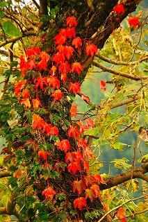 板倉の郷の秋
