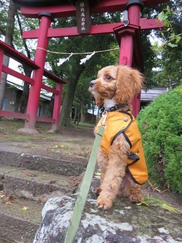 IMG_4114雨上がり散歩