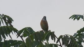 IMG_4126野鳥