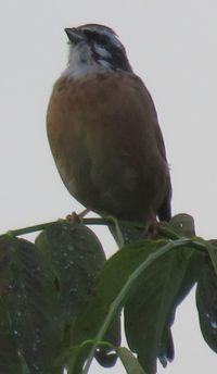 IMG_4127野鳥