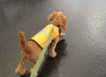 IMG_4440小雨散歩