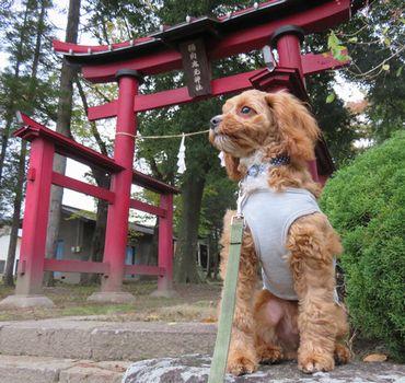 IMG_4531神社
