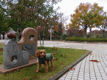 IMG_4552バラ公園