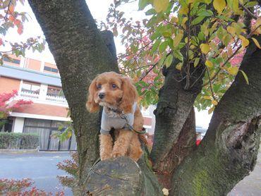 IMG_4572桜の木登り
