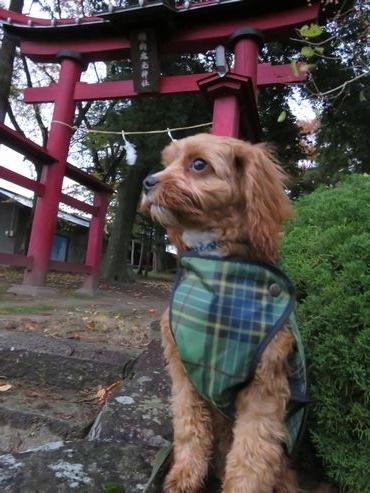 IMG_4654神社