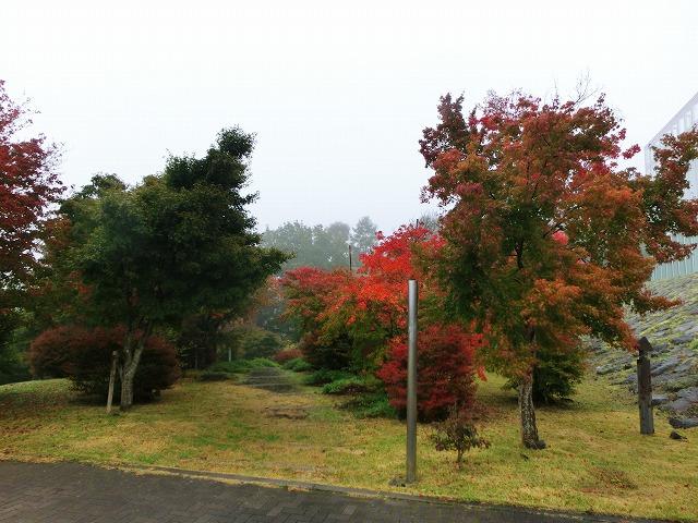 無計画・富士山の旅2016・秋の終わり 020