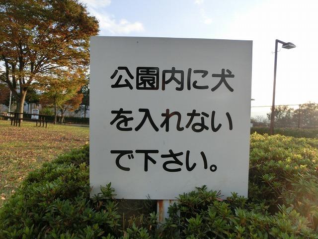無計画・富士山の旅2016・秋の終わり 029