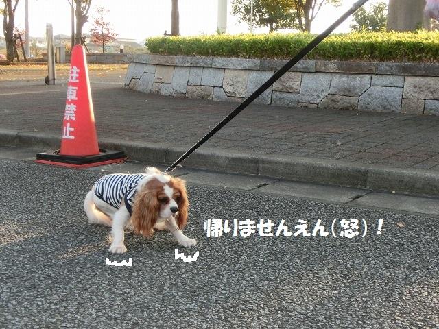 無計画・富士山の旅2016・秋の終わり 055