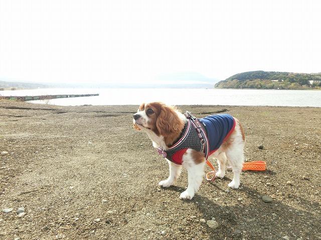 無計画・富士山の旅2016・秋の終わり 097