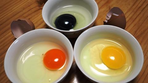 黄卵赤卵黒卵