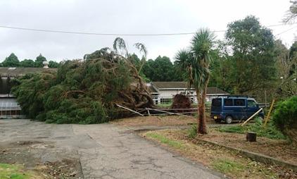 台風9号倒木