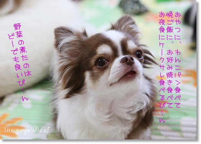 0W8A3389_20160516103455832.jpg