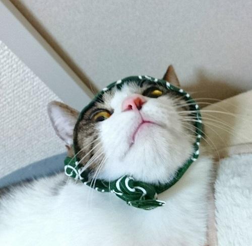 ドロボー猫B