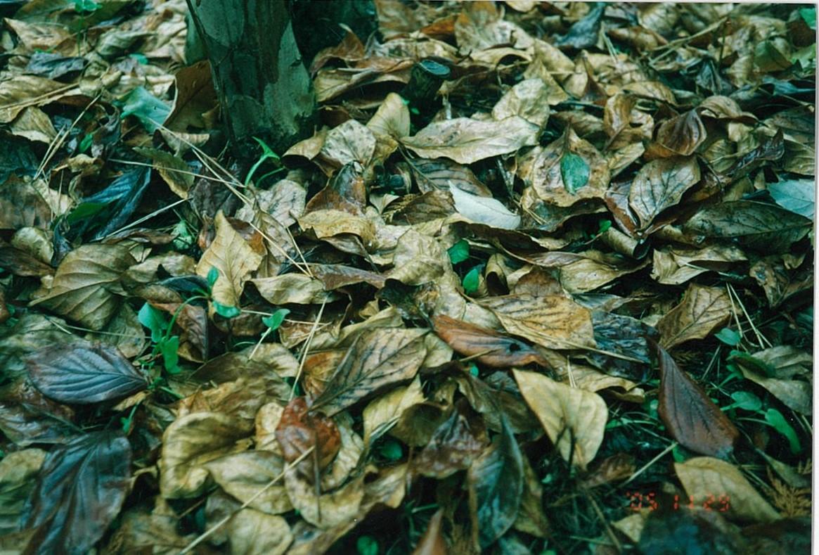秋のソナチネ