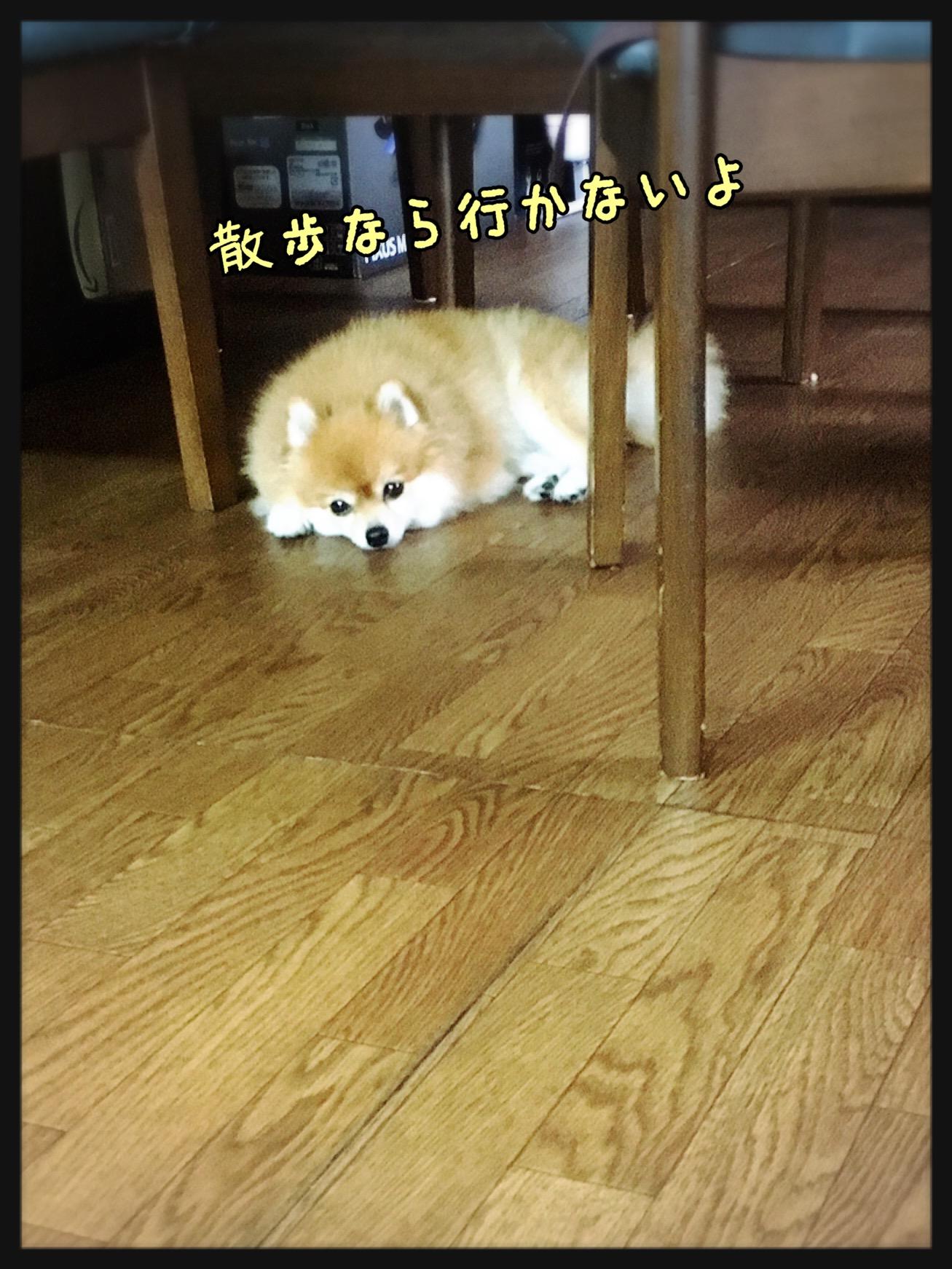 散歩なら行かない