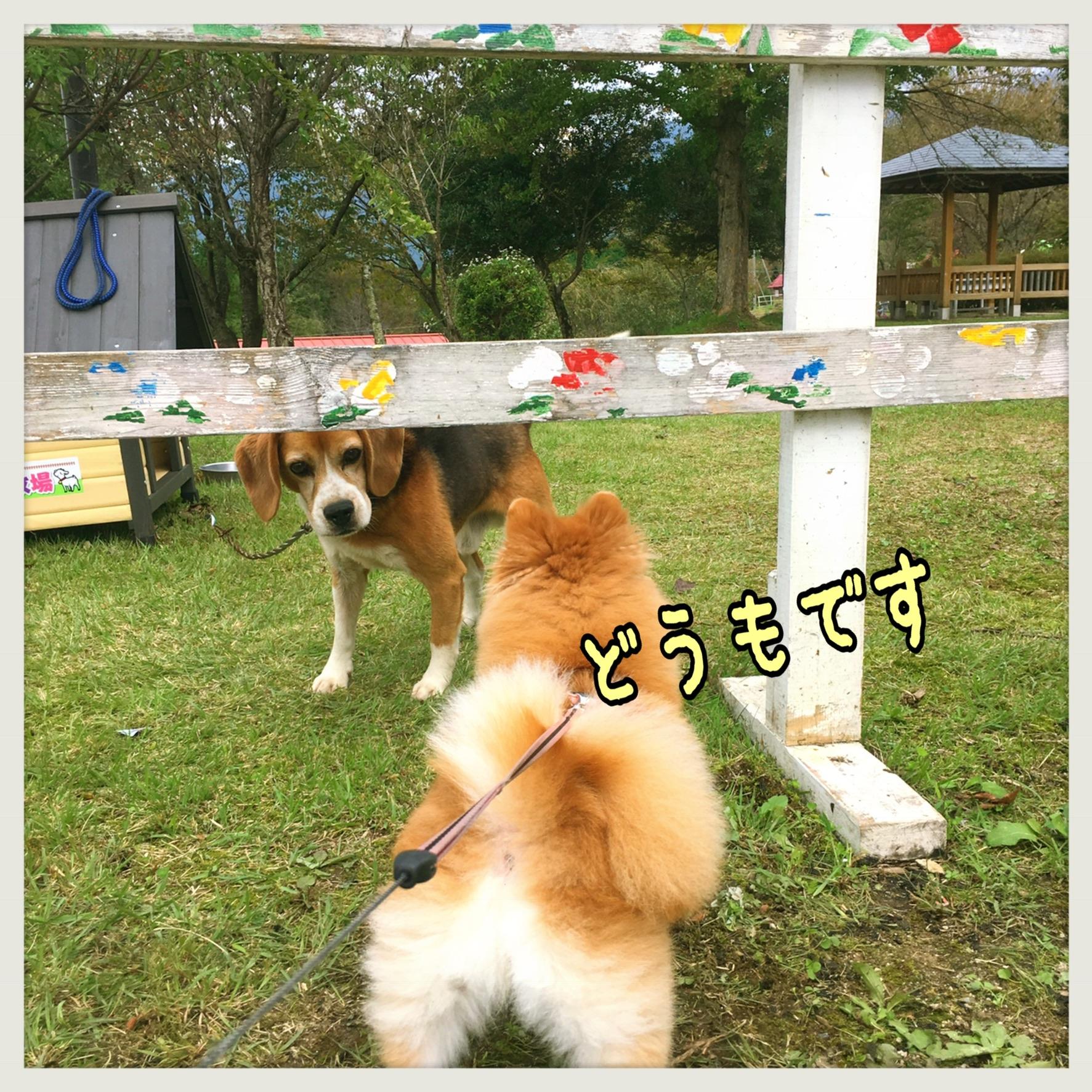 看板犬☆ビーグル